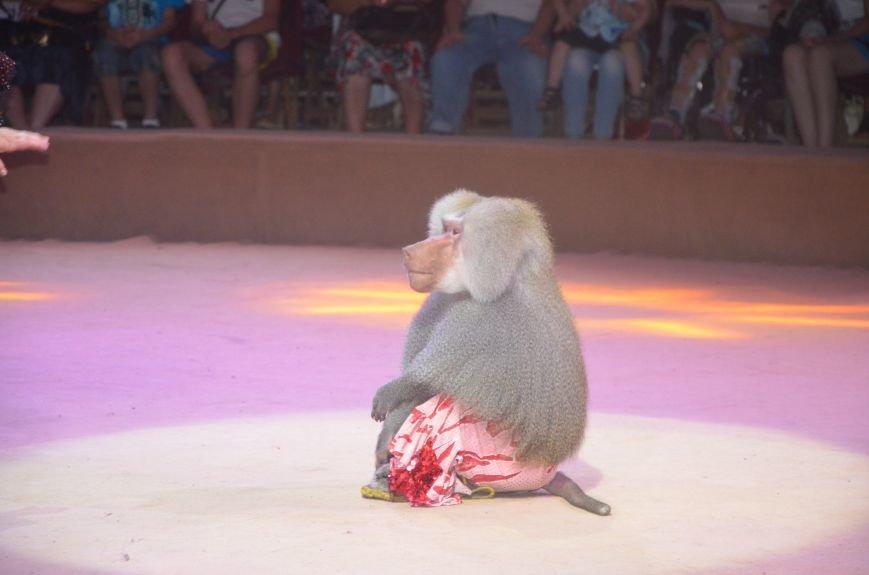 Тысячи мариупольцев увидели ангелов цирка, белого льва, тигра и трюки на высоте (ФОТО+ВИДЕО), фото-44