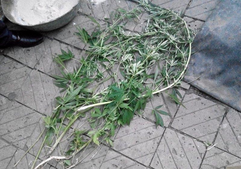 У селидовчан все чаще находят наркотики, фото-2