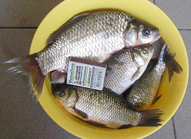 Риба-3