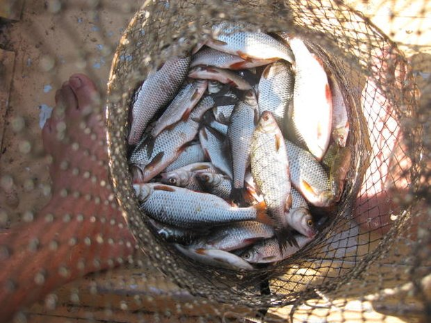 Риба-2
