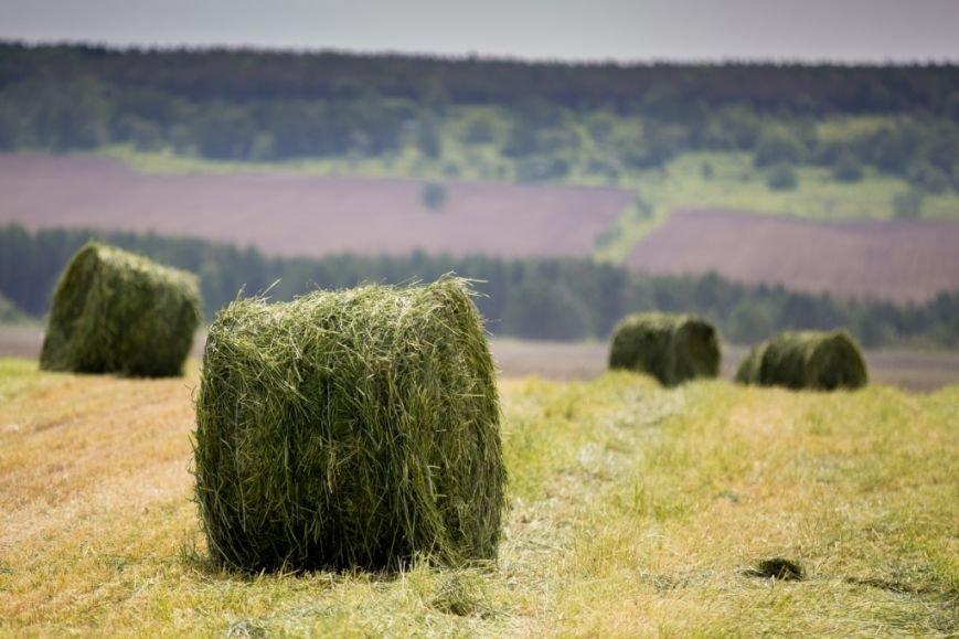 Реализацию инвестиционных проектов в рамках ТОСЭР «Южная» проверил губернатор области, фото-5