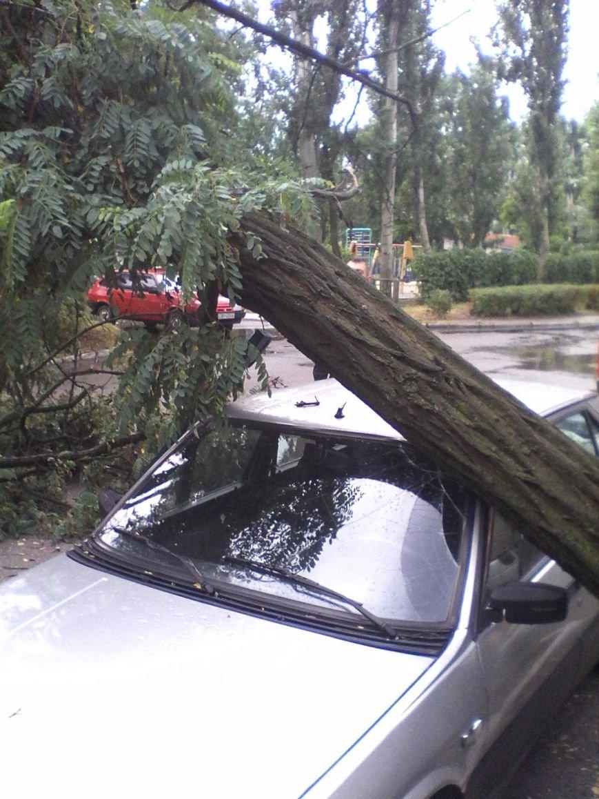 В Запорожской области из-за сильного ветра дерево придавило авто (ФОТОФАКТ), фото-1