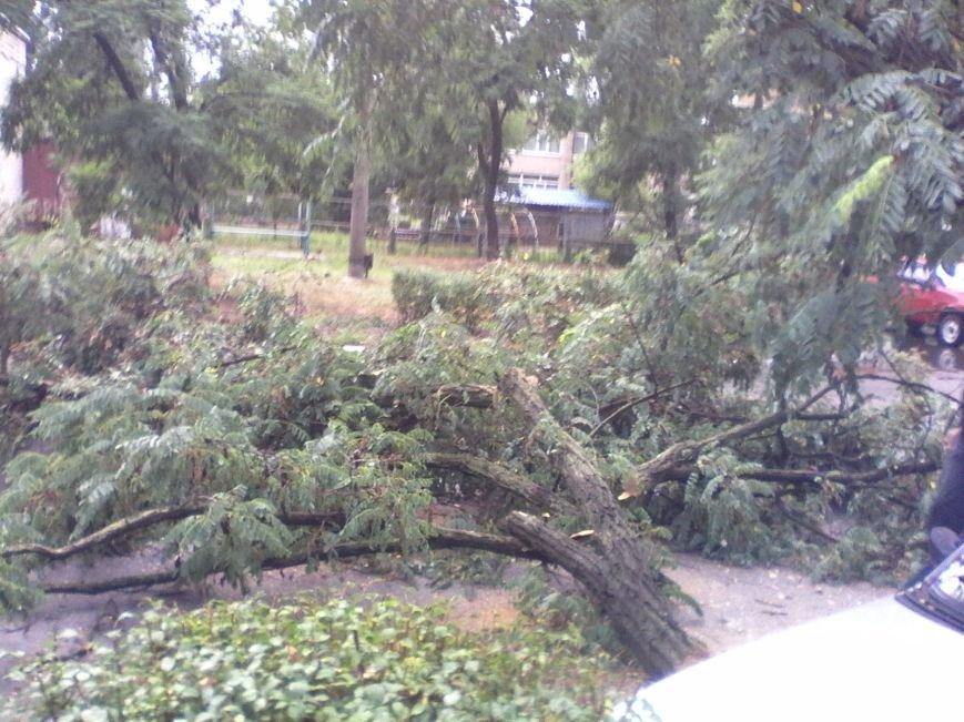В Запорожской области из-за сильного ветра дерево придавило авто (ФОТОФАКТ), фото-2