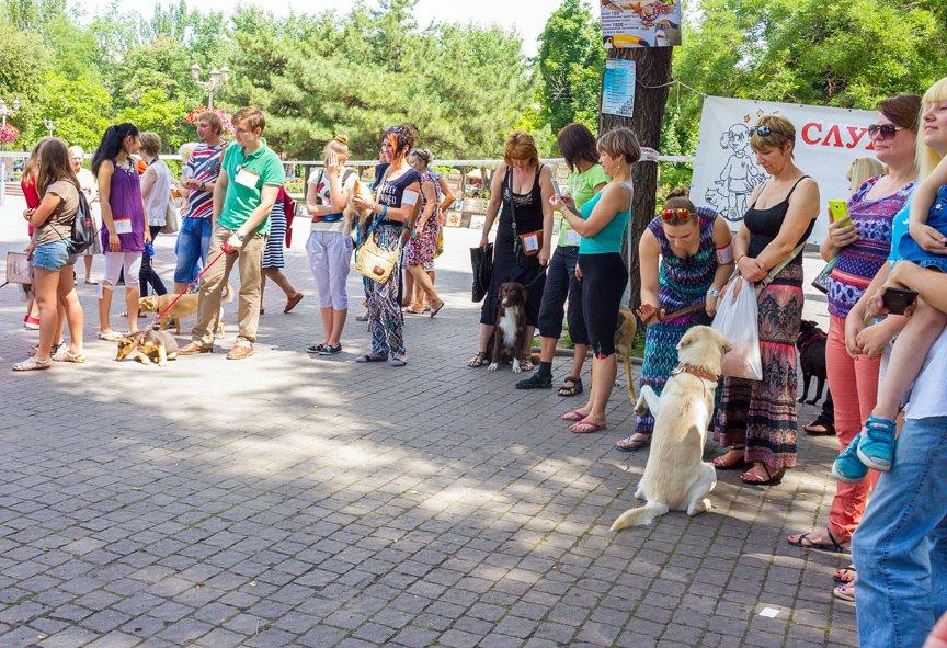 В Запорожье прошла выставка дворняжек: фоторепортаж Алексея Толмачева, фото-10