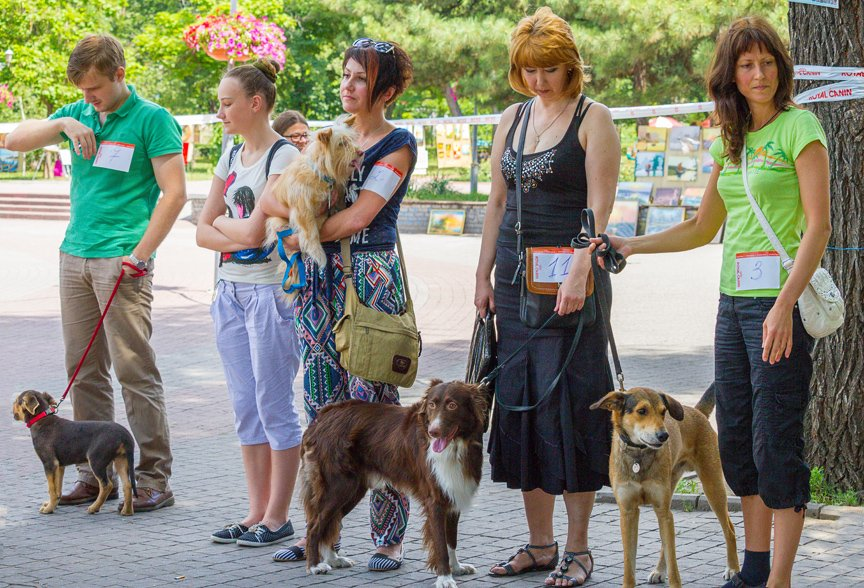В Запорожье прошла выставка дворняжек: фоторепортаж Алексея Толмачева, фото-4