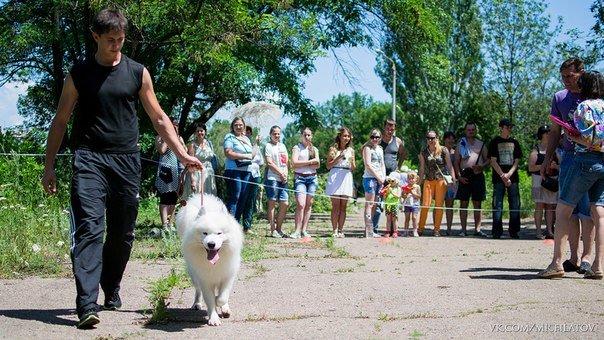 В городе прошла выставка собак, фото-2