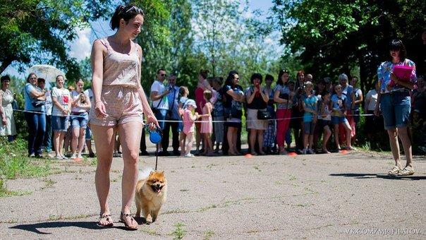 В городе прошла выставка собак, фото-1