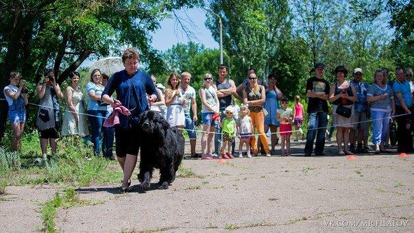 В городе прошла выставка собак, фото-3