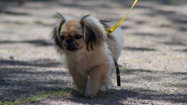 В городе прошла выставка собак, фото-5