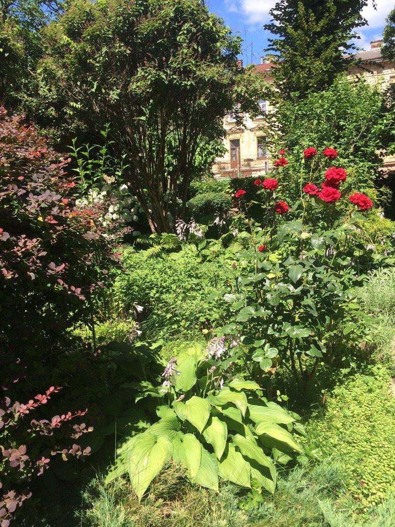 У Львові є унікальний внутрішній дворик, де висадили понад 70 квітів і стоїть 120-річна альтанка (ФОТО), фото-1