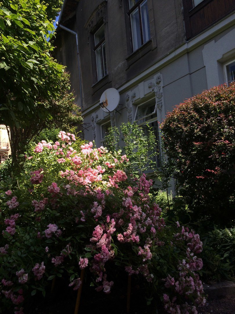 У Львові є унікальний внутрішній дворик, де висадили понад 70 квітів і стоїть 120-річна альтанка (ФОТО), фото-4