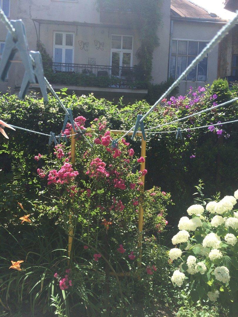 У Львові є унікальний внутрішній дворик, де висадили понад 70 квітів і стоїть 120-річна альтанка (ФОТО), фото-6