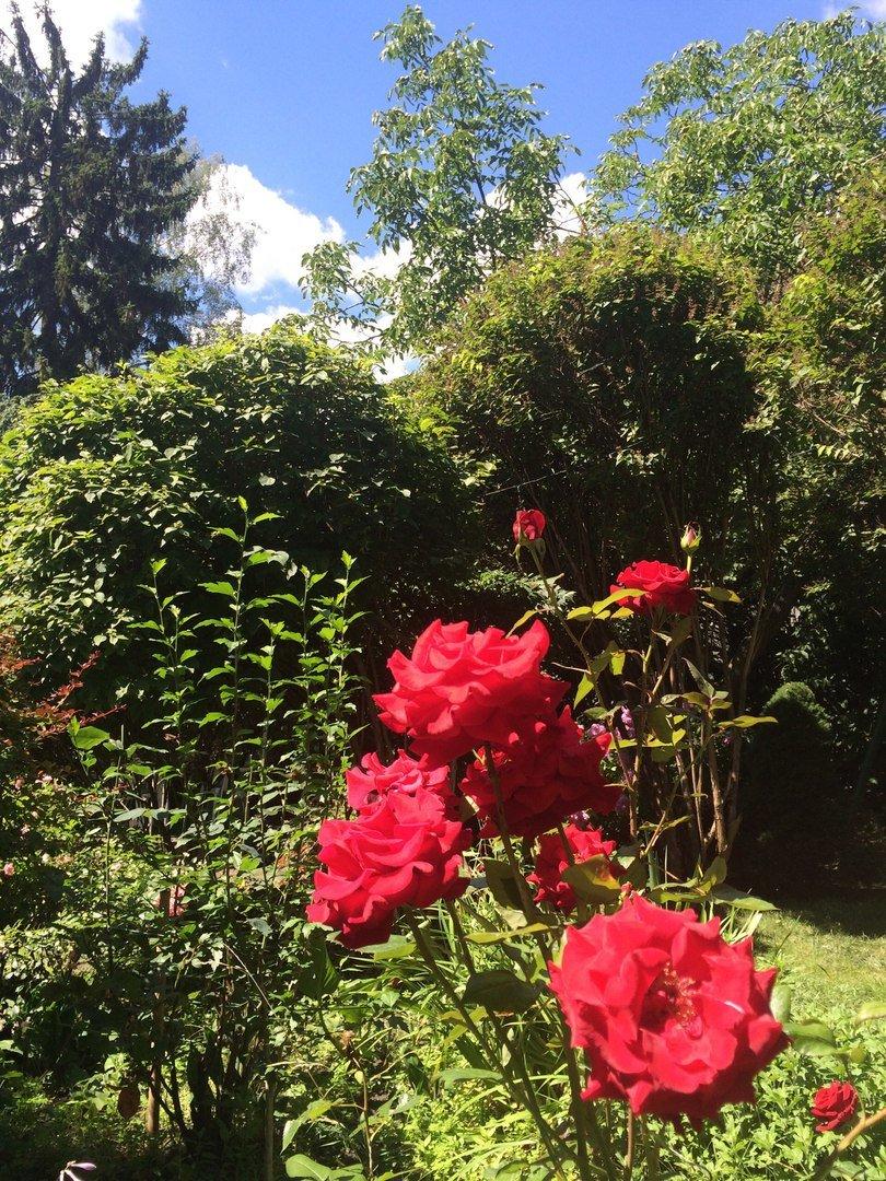 У Львові є унікальний внутрішній дворик, де висадили понад 70 квітів і стоїть 120-річна альтанка (ФОТО), фото-7