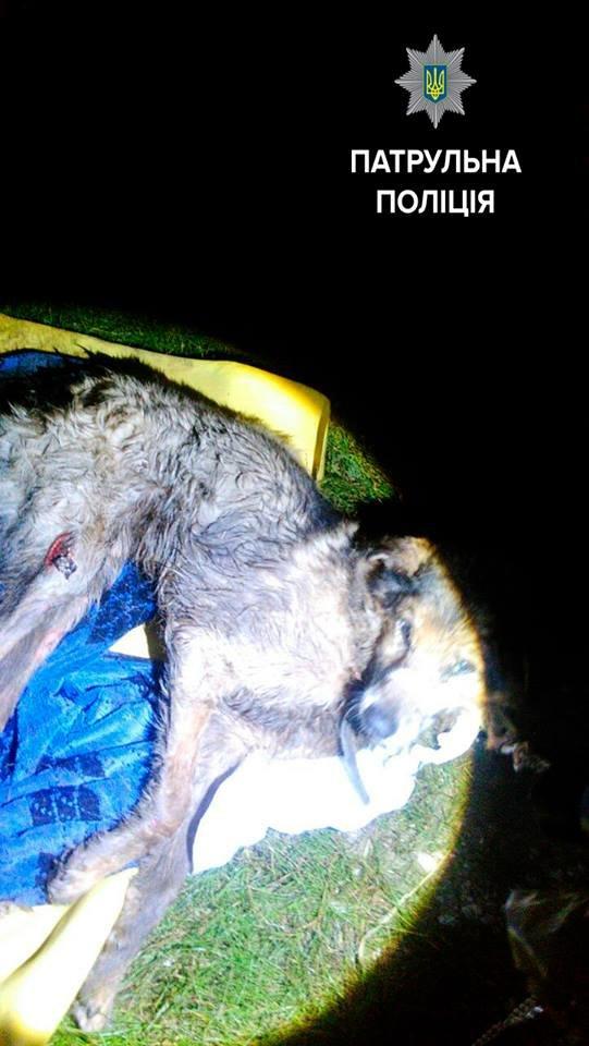 Запорожские патрульные спасли бездомную собаку (ФОТО), фото-4