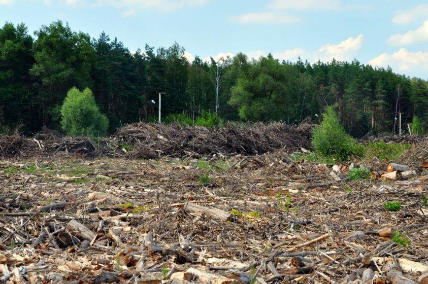 Краснокнижным орхидеям из-за мусора в Сосновке грозит уничтожение, фото-3