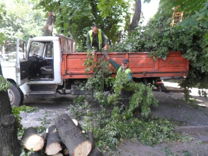 Львівські комунальники доводять до ладу парк, у якому дерево впало на двох школярок (ФОТО), фото-2
