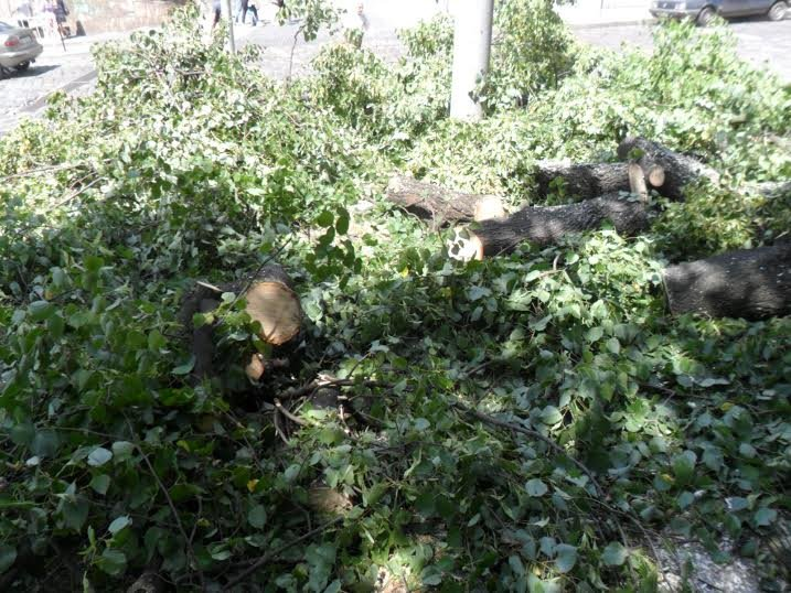 Львівські комунальники доводять до ладу парк, у якому дерево впало на двох школярок (ФОТО), фото-5