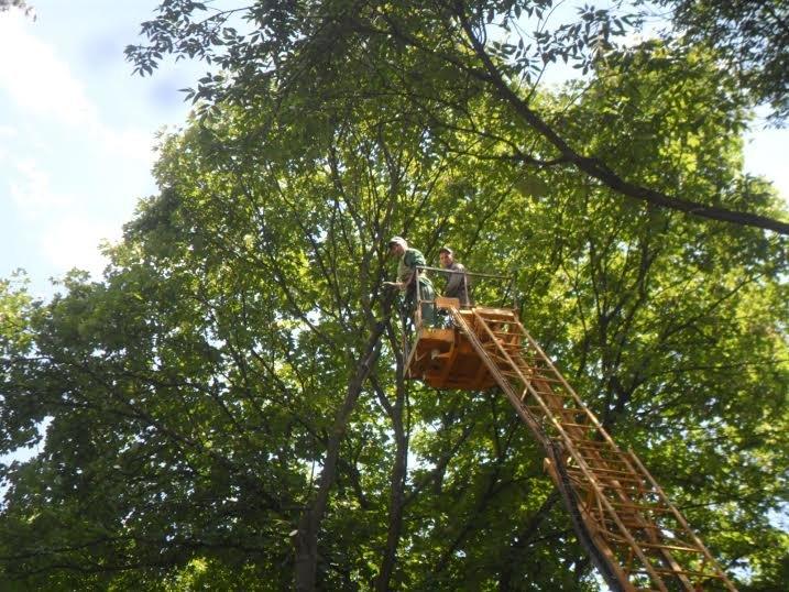Львівські комунальники доводять до ладу парк, у якому дерево впало на двох школярок (ФОТО), фото-1
