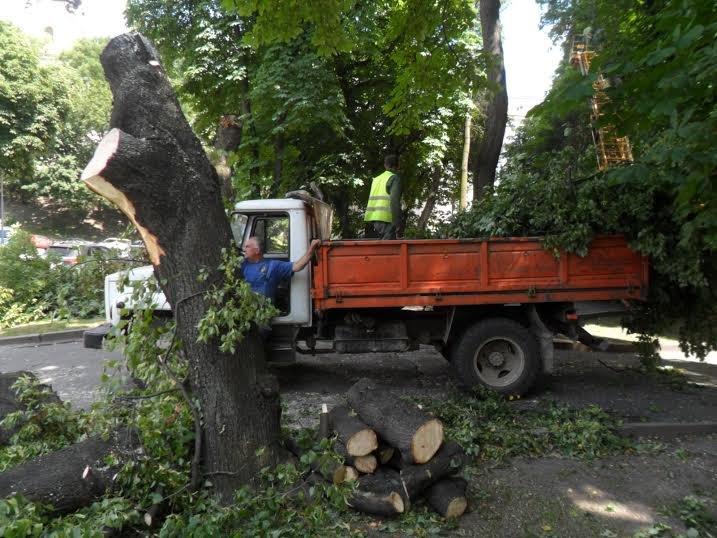 Львівські комунальники доводять до ладу парк, у якому дерево впало на двох школярок (ФОТО), фото-4