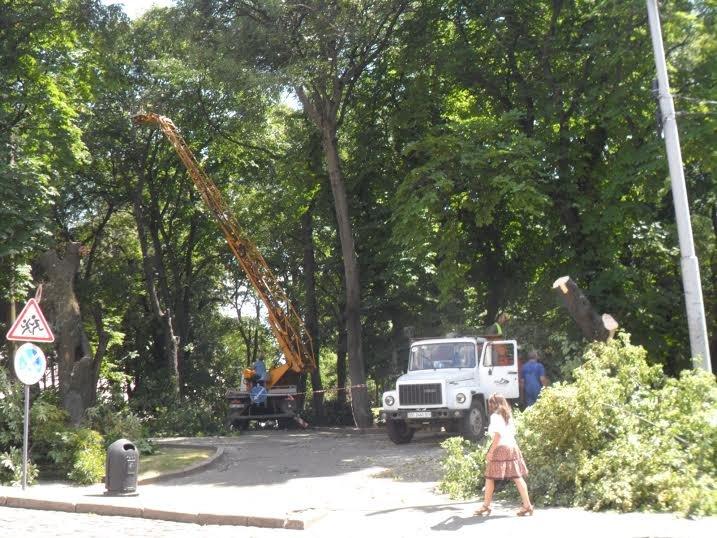 Львівські комунальники доводять до ладу парк, у якому дерево впало на двох школярок (ФОТО), фото-3