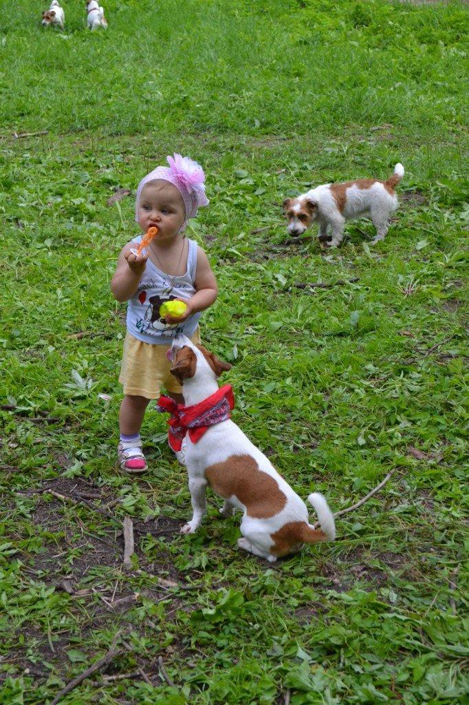 В Баболовском парке отметили день Джек рассел терьеров, фото-4