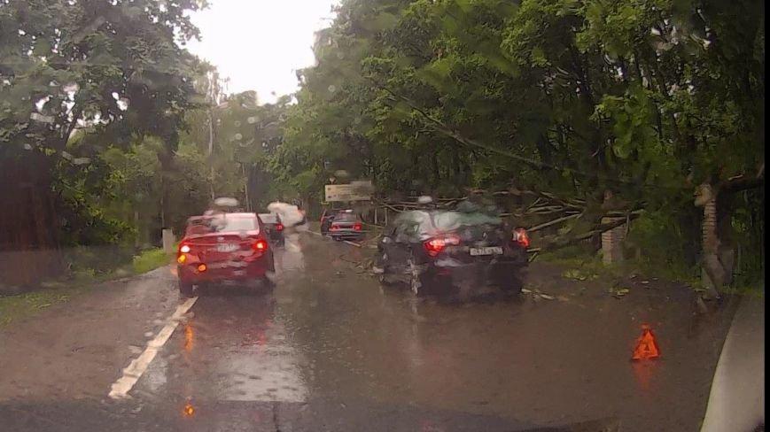 Дерево в Пушкине упало на машину
