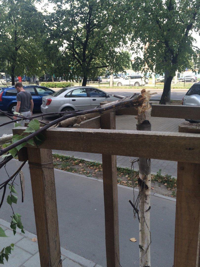 На пр. Чорновола поламали нещодавно висаджені берези (ФОТО), фото-6