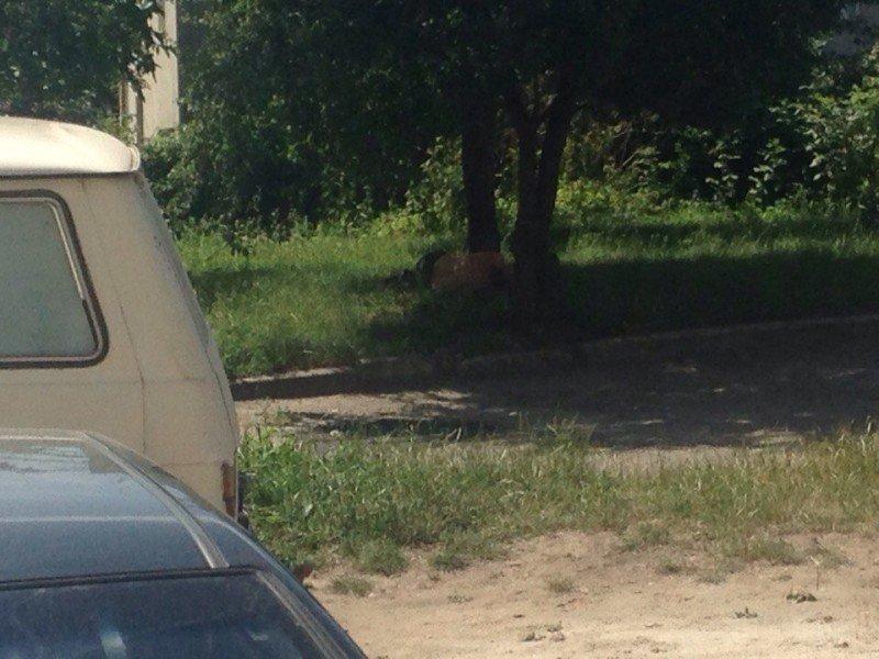 У Тернополі замість ремонту дороги працівники сплять у тіні (фото), фото-1