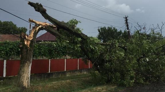 В Ужгородському районі дерево впало прямо на лінію електропередач: фото, фото-1