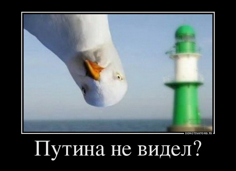 Курьезы недели: Почему исчезает Путин, бойцовский клуб Рады и бессмертный Альфонсо, фото-2