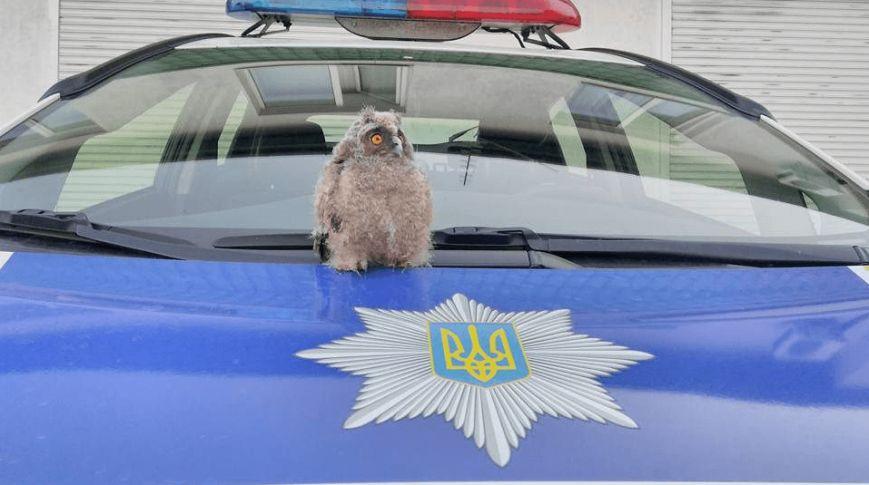 Курьезы недели: Почему исчезает Путин, бойцовский клуб Рады и бессмертный Альфонсо, фото-6