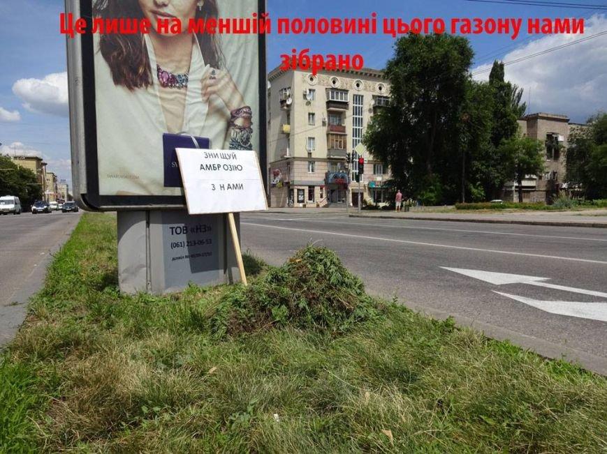 В Запорожье активисты очистили центральный проспект от амброзии, - ФОТО, фото-5