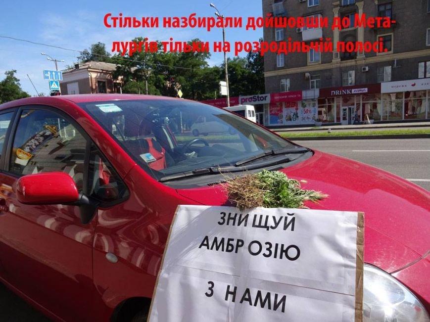 В Запорожье активисты очистили центральный проспект от амброзии, - ФОТО, фото-2
