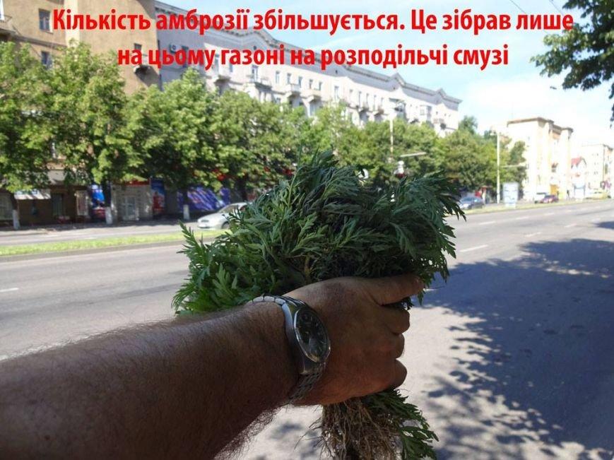 В Запорожье активисты очистили центральный проспект от амброзии, - ФОТО, фото-1