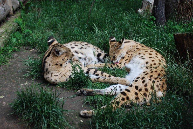 Автоград долучився до програми опіки над тваринами Рівненського зоопарку, фото-2
