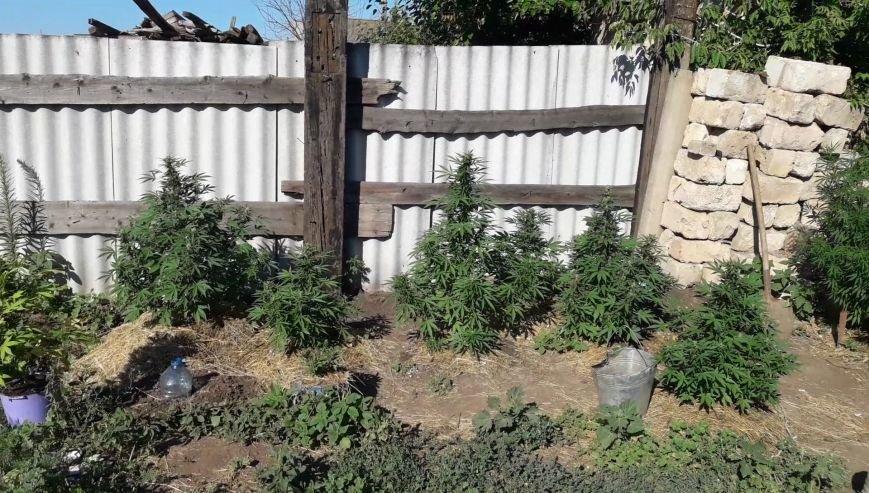 В Бахмутском районе местный житель выращивал наркотики с помощью классической музыки, фото-1