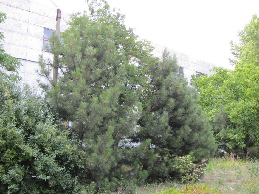 Мелитопольцам предложат купить квартиры в бывшем админздании «Продмаша»?!, фото-3