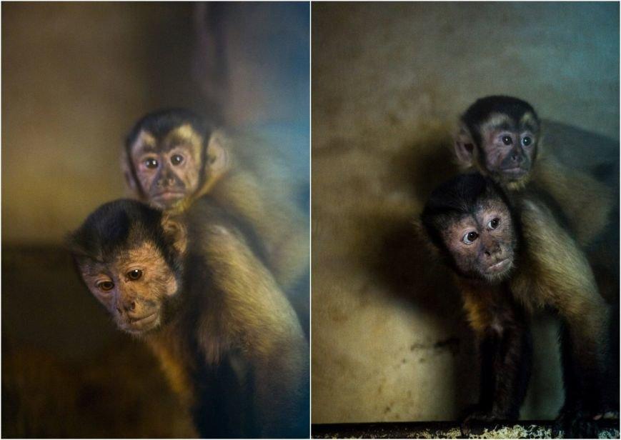В зоопарке Ростова снова пополнение: капуцин и восемь удавов, фото-1