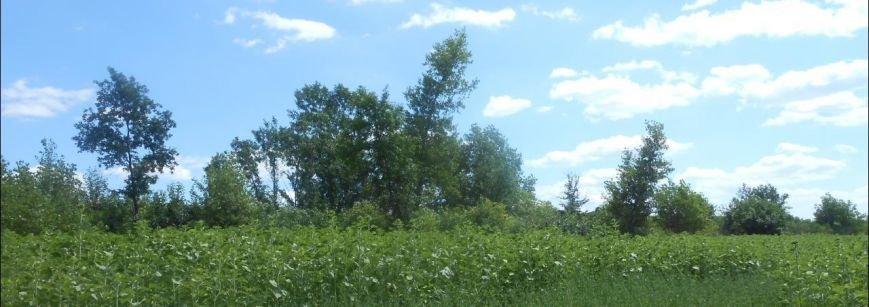 Лісосмуга 2