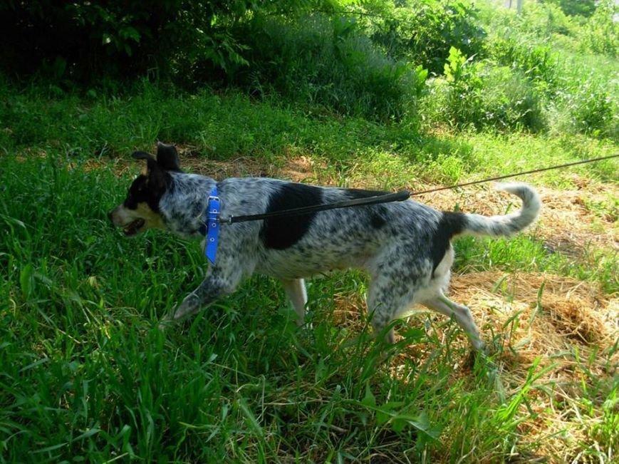В Запорожье ищут дом для собаки-переселенки, - ФОТО, фото-3