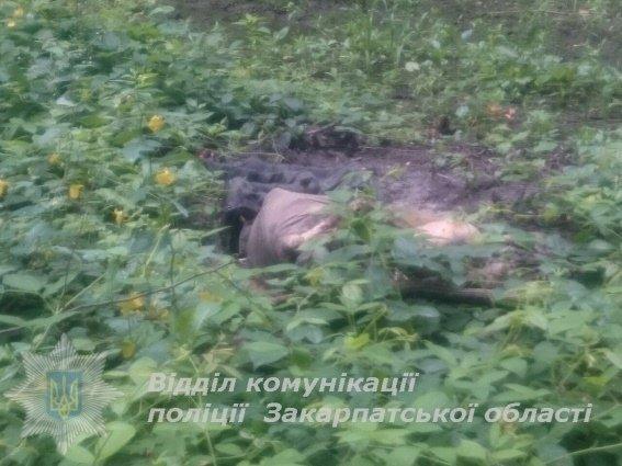 На Мукачівщині грибники знайшли рештки трупа: фото, фото-1