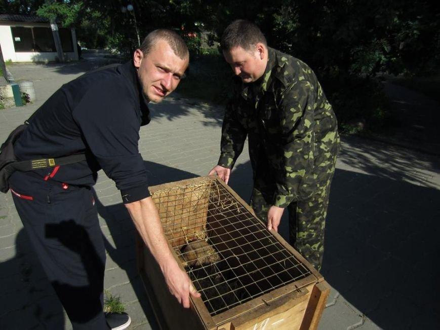 В Харьковской области спасли сурков, запутавшихся в браконьерской петле (ФОТО), фото-2
