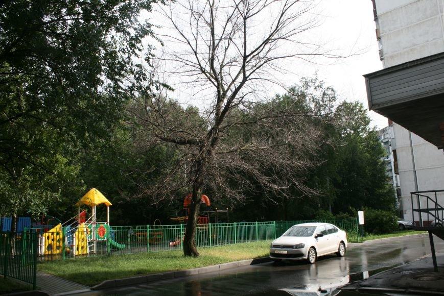 Опасное дерево у подъезда жилого дома Новой Москвы выпилят через 2 недели, фото-2