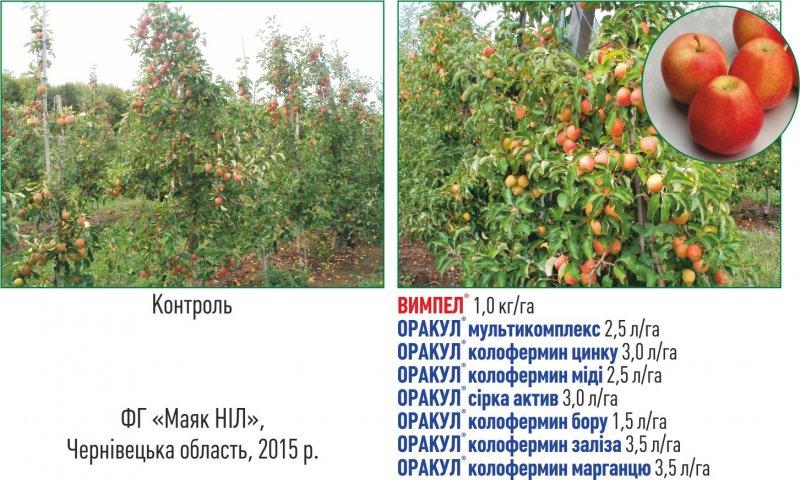 apples_ukr_jpg