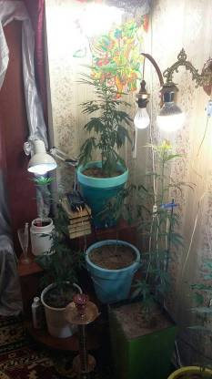 У Львові чоловік вирощував коноплю в орендованій квартирі (ФОТО), фото-1