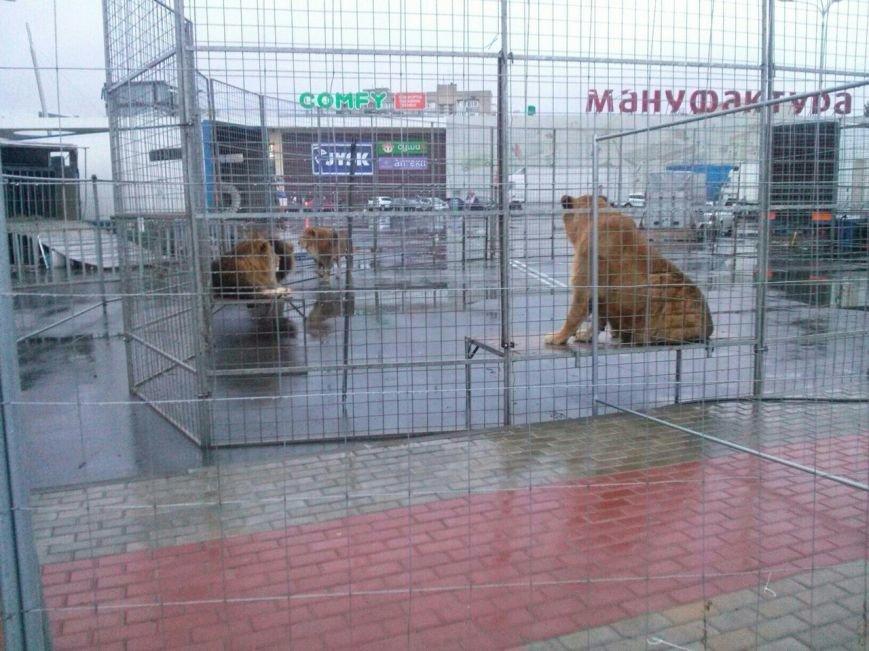 В Сумах экологическая инспекция проверяет приезжий цирк (ФОТО), фото-5