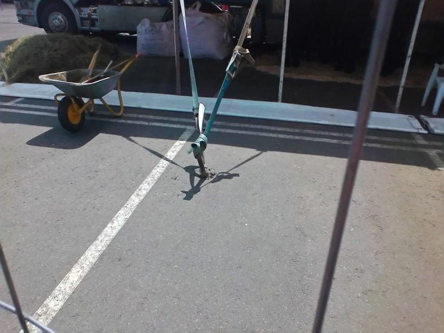 В Сумах экологическая инспекция проверяет приезжий цирк (ФОТО), фото-2
