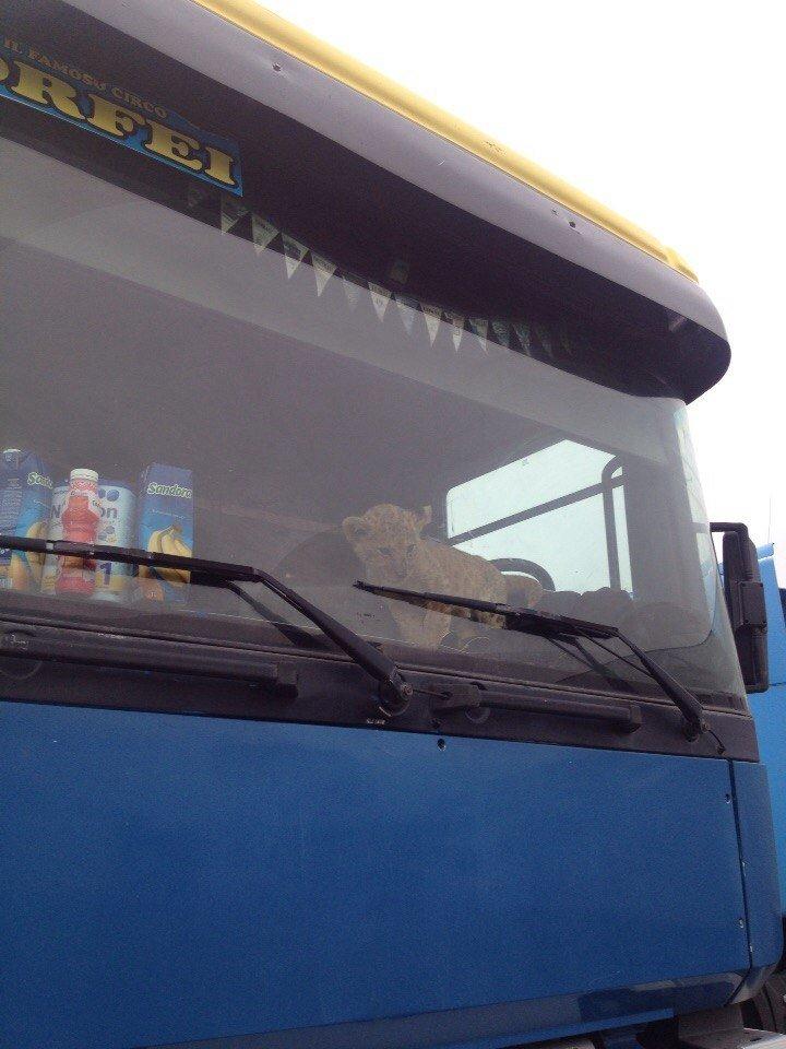 В Сумах экологическая инспекция проверяет приезжий цирк (ФОТО), фото-4