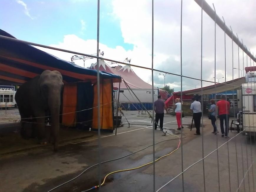 В Сумах экологическая инспекция проверяет приезжий цирк (ФОТО), фото-3