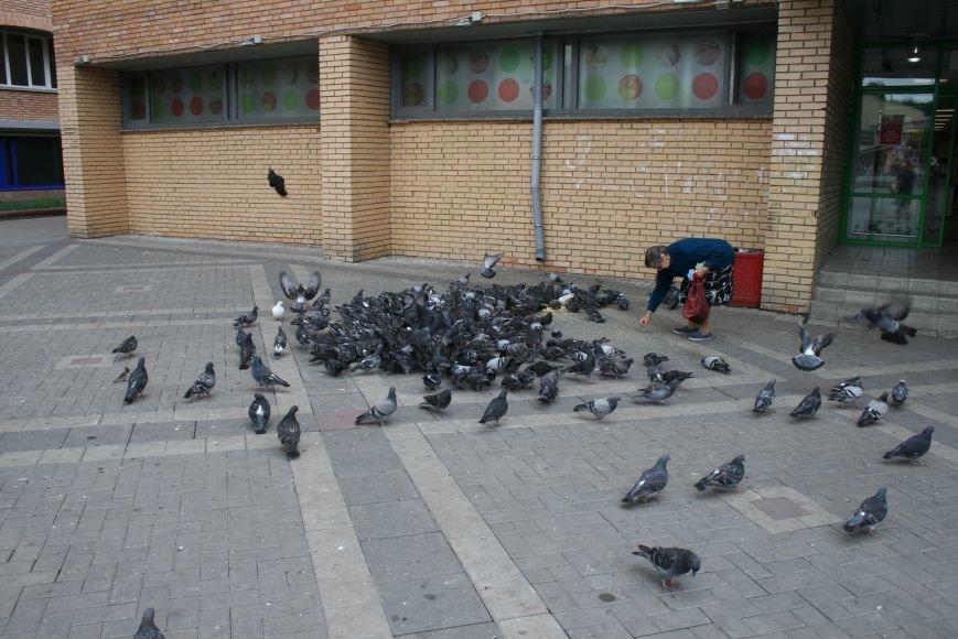 Птица мира под угрозой: голуби Троицка ТиНАО болеют по странной причине, фото-1